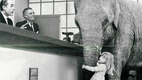 Rufus, an elephant who featured in a 1966 advert in which a young girl brings her very large pet with her to open a savings account